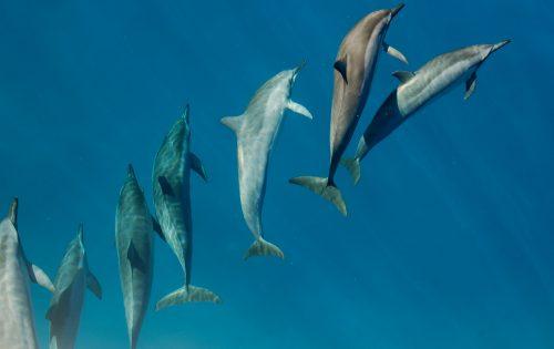 Grandma's Dolphin